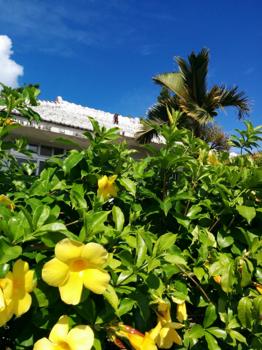 アイランドソープ 黄色の花.png