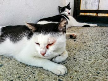 アポロ 猫2匹 前髪 七三.png